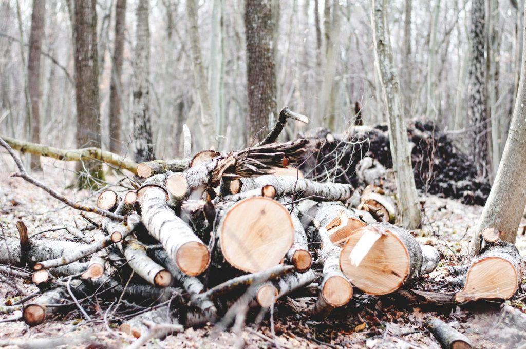 Bomen kappen